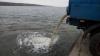 Zeci de tone de pește, ELIBERATE în râurile Moldovei. Care este scopul acțiunii