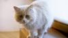 GROAZNIC! O femeie a închis în casă 14 pisici flămânde, care s-au mâncat una pe alta (VIDEO)