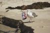 STUDIU: De ce păsările marine consumă deșeuri de plastic