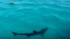 Imagini șocante: Un rechin a ieșit brusc din adâncuri și și-a înfipt colții în captura unor pescari (VIDEO)