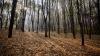 Trei indivizi, prinşi în flagrant de poliţişti într-o pădure! Cu ce se ocupau tinerii
