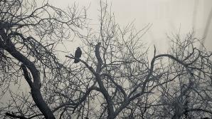 Ceaţa de dimineaţă a dat peste cap traficul aerian. Pasagerii se plâng de indiferenţa administraţiei aeroportului