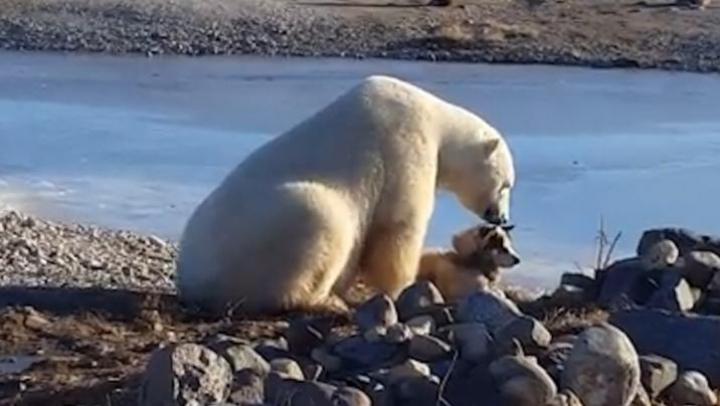 VIDEO VIRAL! Un urs polar îmbrăţişează cu dragoste un câine (VIDEO)