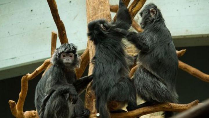 Un grup de vidre încearcă să înece o maimuţă. IMAGINI ŞOCANTE din lumea animalelor