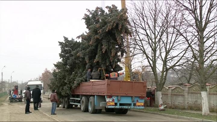Principalul Pom de Crăciun al țării a fost instalat în centrul Capitalei. CUM ARATĂ (FOTOREPORT)