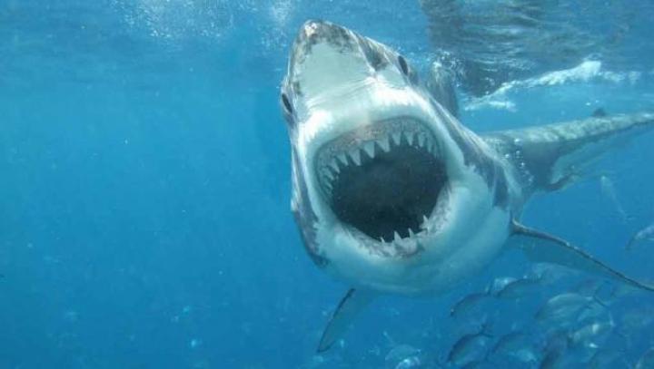 Un bărbat NEÎNFRICAT încearcă să prindă un rechin cu mâinile goale (VIDEO)