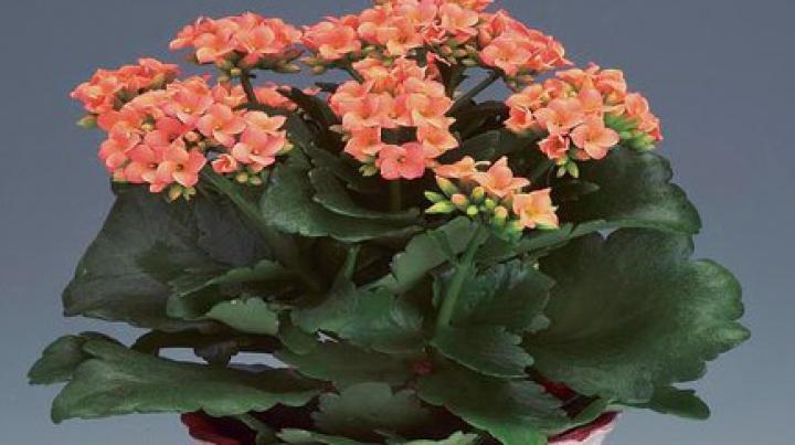 Sfaturi pentru a avea flori sănătoase și viguroase! Trei trucuri simple ca să îngrijești plantele iarna