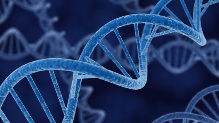A fost descoperită gena care ne limitează dorința de a consuma alcool