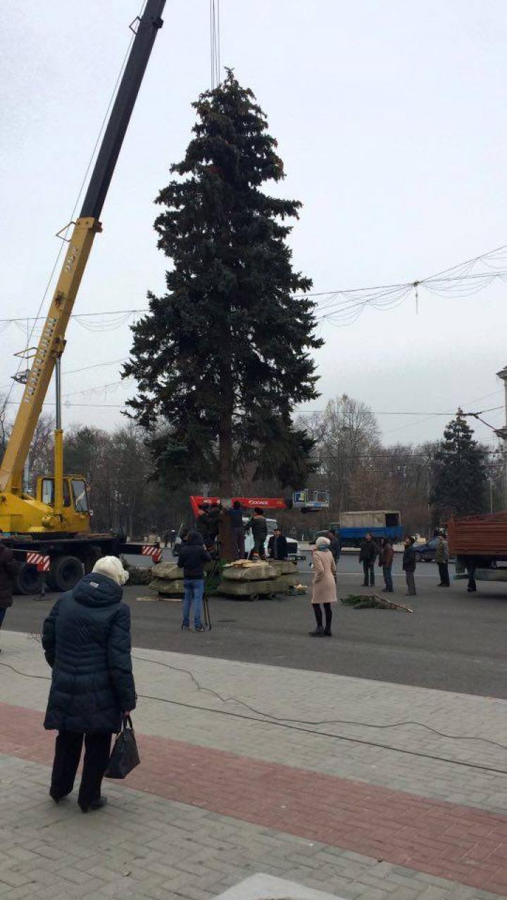 Pomul de Crăciun a fost adus în PMAN. Impresiile locuitorilor Capitalei (FOTO)