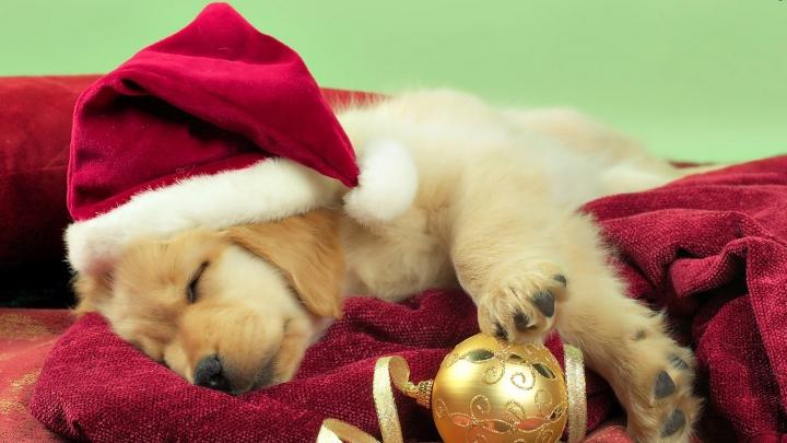 VIRAL PE INTERNET! O căţeluşă din Florida îl adoră pe Moş Crăciun (FOTO)
