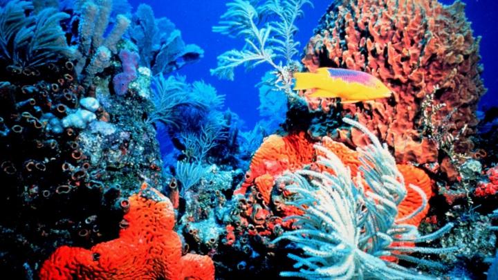 Oamenii de știință au semnalat CEA MAI MARE EXTINCŢIE a coralilor din istorie