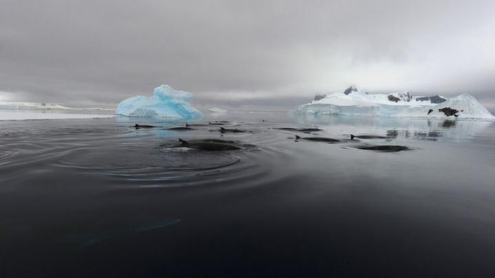 ZGOMOT CIUDAT în zona arctică: Toate animalele au fugit! Armata, trimisă să investigheze