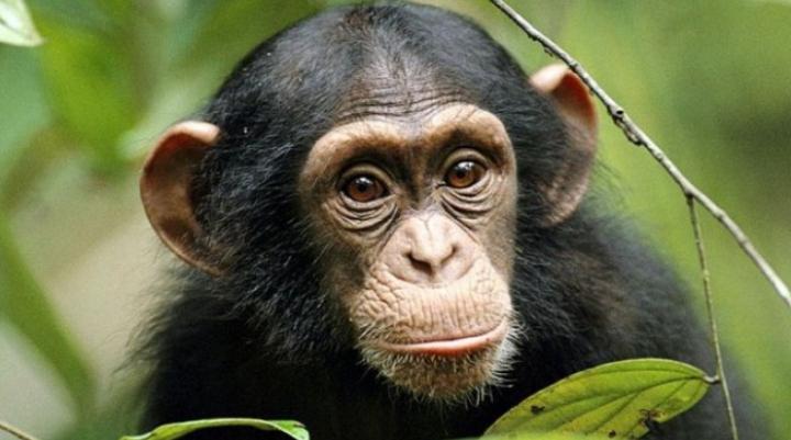 O maimuță a declanșat un masacru: Cel puțin 20 de oameni au murit. Cum a fost posibil