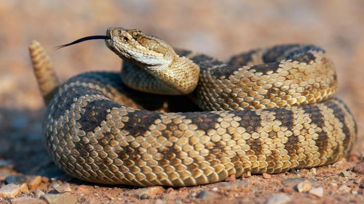 A tăiat capul unui şarpe, încercând să-şi salveze soţia. ESTE TERIFIANT ce a urmat (FOTO)
