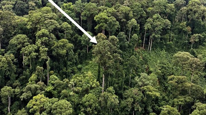 Descoperire impresionantă! Ce a observat un cercetător în timpul unui zbor cu elicopterul