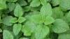 Fă-ţi propria farmacie! Top 5 plante care calmează durerea