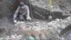 IMPRESIONANT: Descoperirea unei fosile de balenă cu o vechime de 1,8 milioane de ani (FOTO)