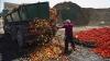 Rusia a distrus aproape NOUĂ TONE de produse alimentare interzise pentru a fi importate