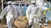 Primul caz de GRIPĂ AVIARĂ H5N8 identificat la o fermă de păsări din Franța
