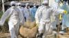 Gripa aviară, MAI APROAPE de Moldova! Virusul, găsit într-un cadavru de pasăre din România