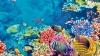 Proiectul uluitor care ar putea salva Marea Barieră de Corali din Australia
