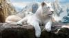 Fascinante și rare! Topul celor mai scumpe animale din lume (FOTO)