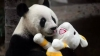 """""""Bunicul"""" urșilor panda, Pan Pan, a murit la 31 de ani"""