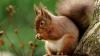 O familie a rămas fără instalaţia de sărbători după ce o veveriţă le-a furat beculeţele (VIDEO)