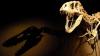 Scheletul unui dinozaur de 150 de milioane de ani a fost vândut la licitaţie. CARE A FOST PREŢUL