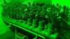 Cultivau plante de cânepă în laborator. Doi bărbaţi din Cahul, reţinuţi de oamenii legii (VIDEO)