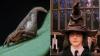 """Filmele ,,Harry Poter"""", o sursă de inspiraţie pentru numele unei noi specii de păianjen"""