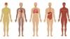 Douăsprezece părți ale corpului care nu servesc la (aproape) NIMIC