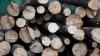 Defrișare ilegală de copaci la sfârșit de iarnă. Hoții din Edineț fac afacere profitabilă cu lemne