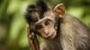 Adevăratul motiv pentru care maimuțele nu pot vorbi. Iată ce spun oamenii de ştiinţă