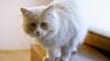O pisicuţă, vedetă pe Internet. Prin ce a uimit felina