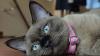 O pisică s-a întors acasă cu un bilet misterios ascuns în zgardă