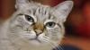 Îngrăşarea pisicilor după sterilizare: mit sau realitate