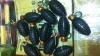 Peste 20.000 de petarde introduse prin contrabandă, depistate de către Echipele Mobile ale Serviciului Vamal (FOTO)