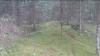 Un bărbat a întâlnit o vulpe în pădure. RÂZI CU LACRIMI când vei vedea ce a urmat (VIDEO VIRAL)