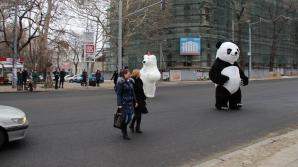 Doi urși, surprinși în preajma teatrului de Operă şi Balet din Capitală! Ce făceau în plină stradă (FOTO)