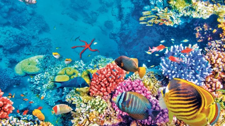 ÎNGRIJORĂTOR: Marea Berieră de Corali din Australia este afectată de un focar de stele de mare
