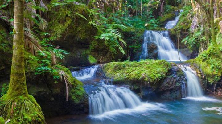 ALARMANT! Dispariţia pădurilor tropicale poate duce la apariţia unei boli înfiorătoare