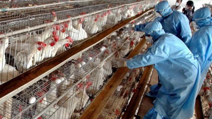 PANICĂ în Sudul Franţei. Focare de gripă aviară au fost descoperite în 13 țări europene