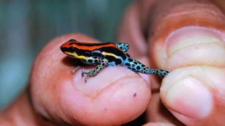 Şarpele-curcubeu şi şopârla-dragon, între noi specii de animale descoperite în Asia