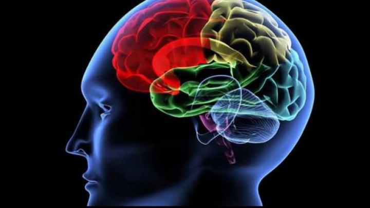 Descoperire istorică: Oamenii de ştiinţă au identificat genele responsabile cu inteligenţa umană