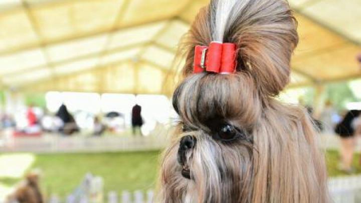 Câinii se pot confrunta cu încărunțirea prematură a firelor de păr din blană. Care este cauza