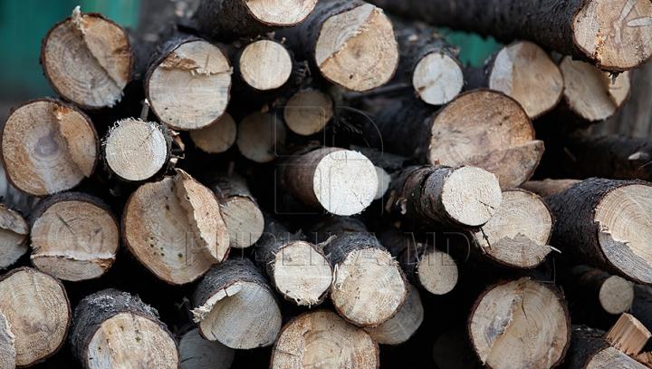 """Criza de lemne, creată de Moldsilva. Inginerul şef al agenţiei: """"Unii şi-au făcut din asta business"""""""