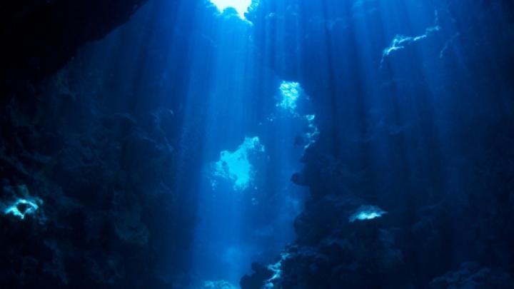 O CREATURĂ STRANIE care bântuie oceanele a fost observată pentru prima oară în acest secol