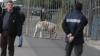 PANICĂ în Palermo! Un tigru alb a fugit dintr-un circ ambulant şi se plimba nestingherit pe străzi