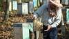 Australia: Albinele și alte insecte, responsabile pentru cele mai multe DECESE